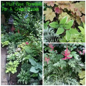 6 Must Have Perennials for a Shade Garden