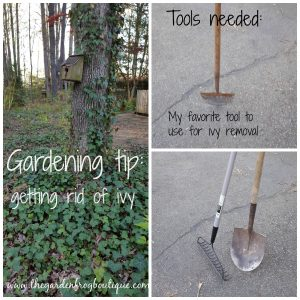Gardening tip: getting rid of ivy