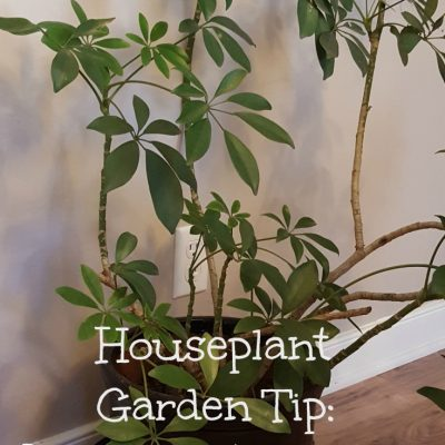 Gardening tip: Use a dollar store oil drain pan for a potted plant saucer